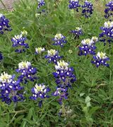 Texas Property Source LLC, Other Pro in Cedar Park, TX