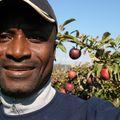Olufemi Falebita, Real estate agent in BROOKLYN