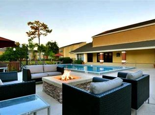 Florida Goldenrod 32792 Solis Winter Park