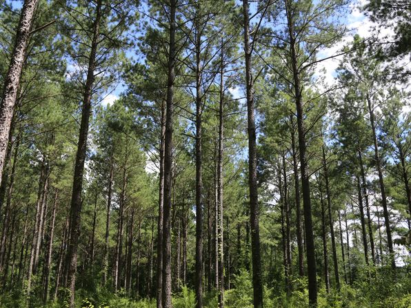 null bed null bath Vacant Land at  Highway 173 S Newville, AL, 36353 is for sale at 545k - 1 of 25