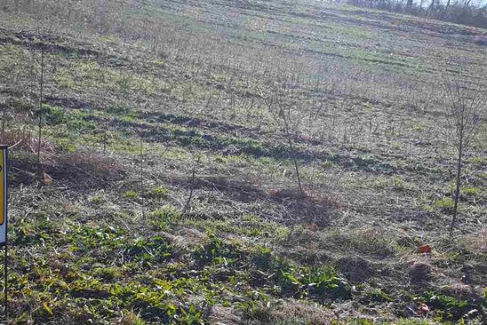 null bed null bath Vacant Land at  Joanne Cir Morristown, TN, 37814 is for sale at 35k - google static map